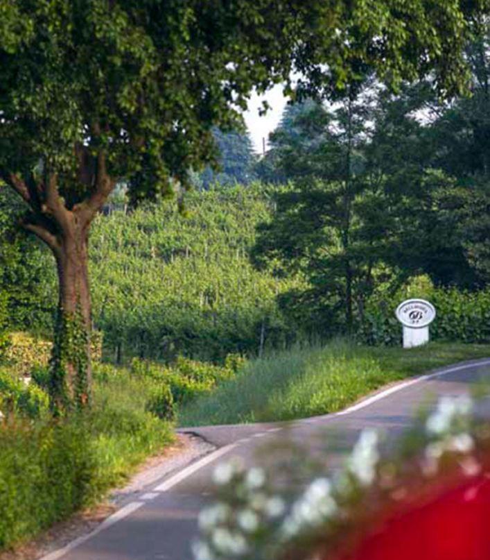 Esperienza Bellavista: visita della Cantina, passeggiata nei vigneti e degustazione di 3 vini