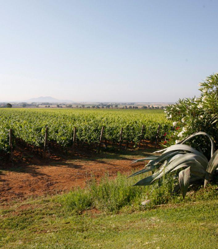 Esperienza Acquagiusta: visita della cantina e degustazione dei 4 vini e And'Olio della Maremma