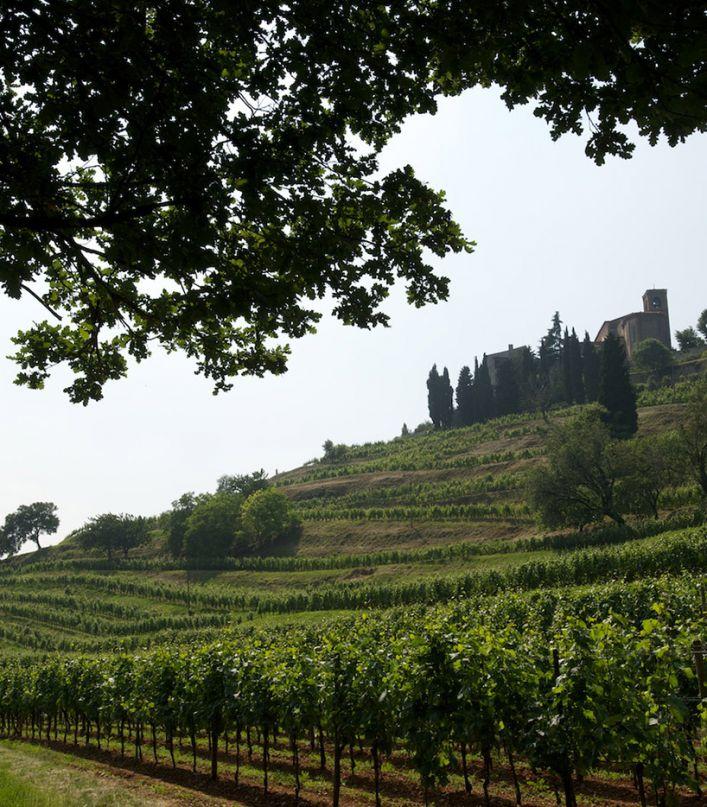 Tra le vigne e l'infinito. Visita del Convento, delle vigne e degustazione di 3 vini